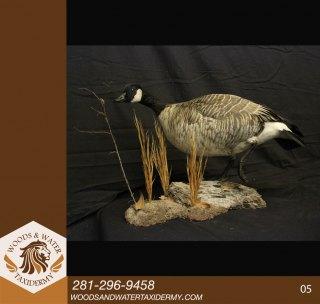 Birds05