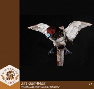 birds23