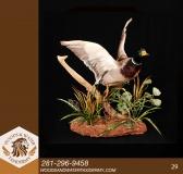 BIRDS29