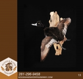 Birds13