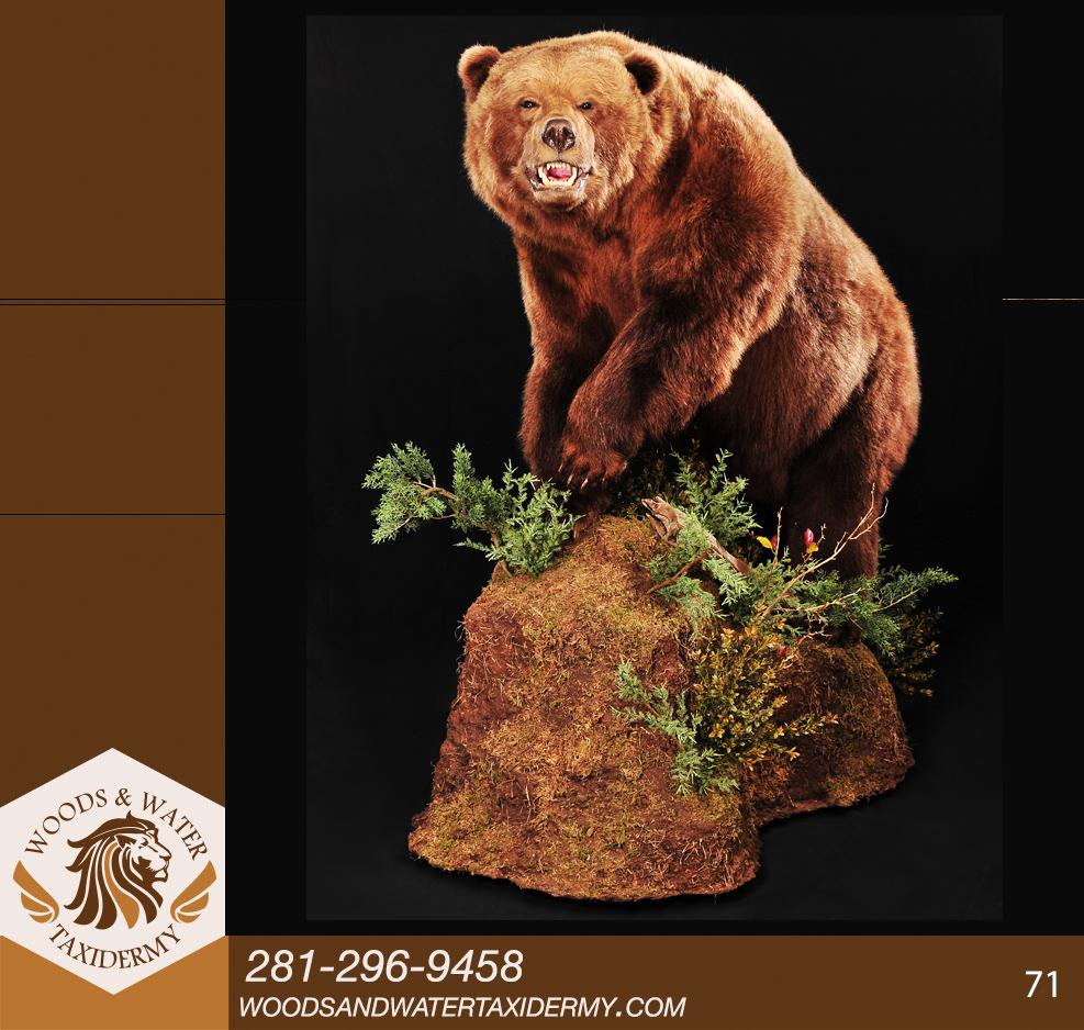 Bears71