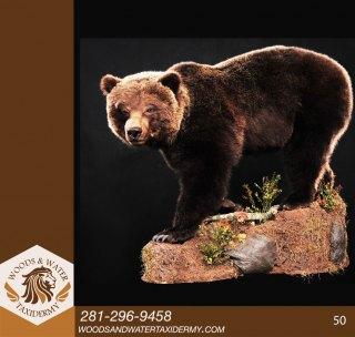 BearLS50